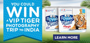 You could WIN a VIP tiger photography trip to India